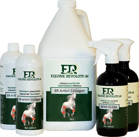Collagen for horses